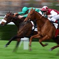 Экипировка для конного спорта