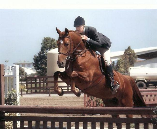 Вид конного спорта