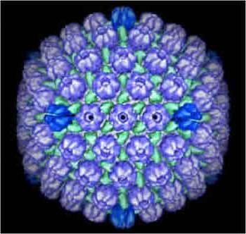 Вирус эйнштейна-барра: причины возникновения, симптомы и лечение