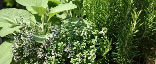 Выбираем травяной сбор для похудения и очищения организма
