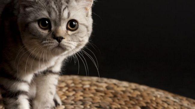 Выбирая имена для кошек-девочек, следует соблюдать опеределенные правила