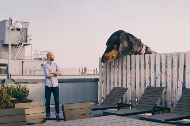 Забавный фотопроект: если бы собака была настолько большой, как ей кажется