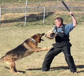 Защита от собаки: методы