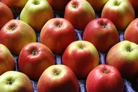 Жиросжигаемые диеты: варианты и принципы действия